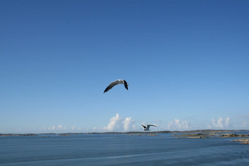 2 vogels vliegen boven de zee
